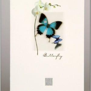 ZBF - Butterfly