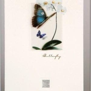 ZBF2 - Butterfly 2