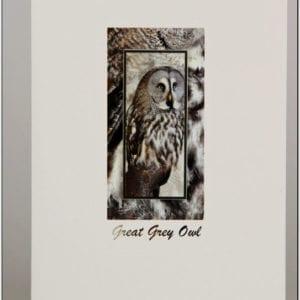 SGGO - Great Grey Owl