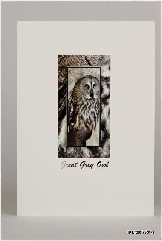 SGGO - Great Grey Owl