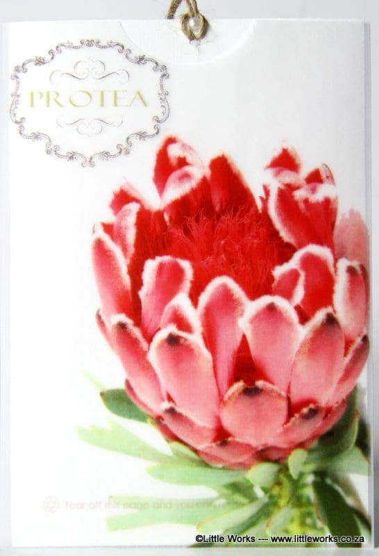 TPR - Protea