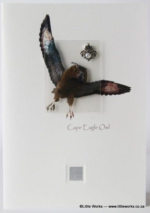 ZCEO - Cape Eagle Owl