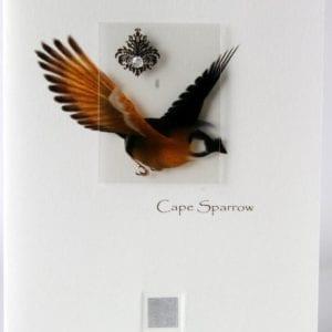 ZCS - Cape Sparrow