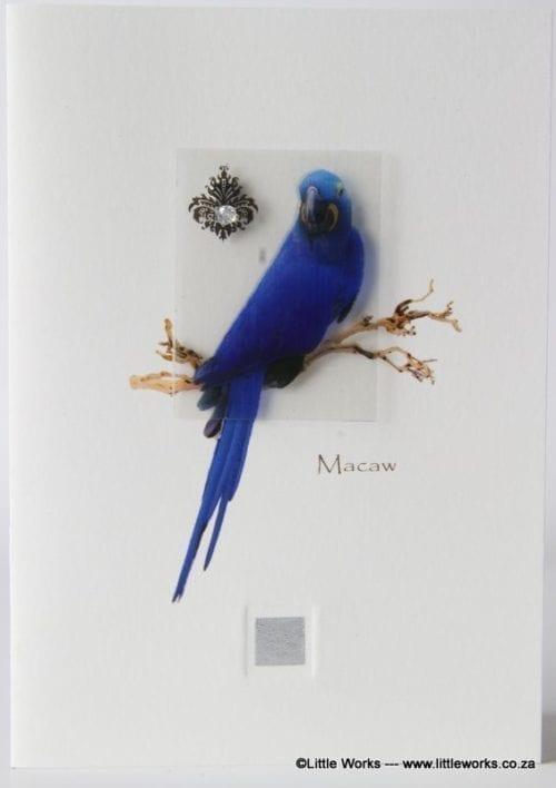 ZM - Macaw
