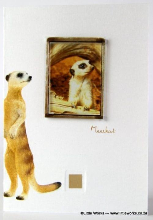 ZMK1 - Meerkat