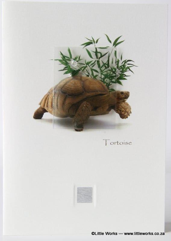 ZT - Tortoise