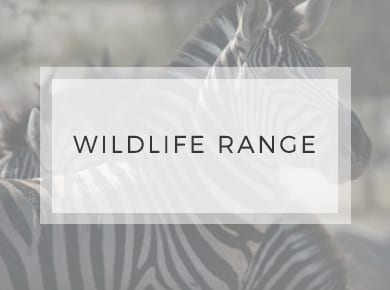 Wildlife Range ~ Greeting Cards ~ Designer Stationery