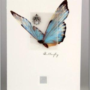 ZBF1 - Butterfly Large