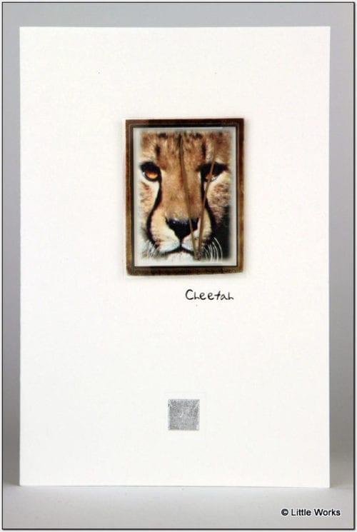 ZCH - Cheetah