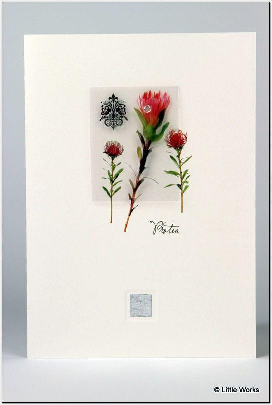 ZKP - King Protea