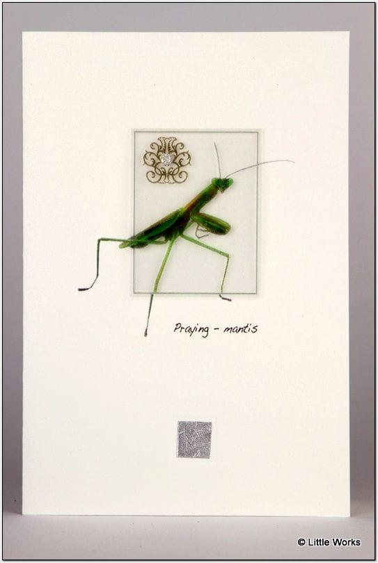 ZPM - Praying Mantis