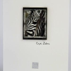 ZCZ - Cape Zebra