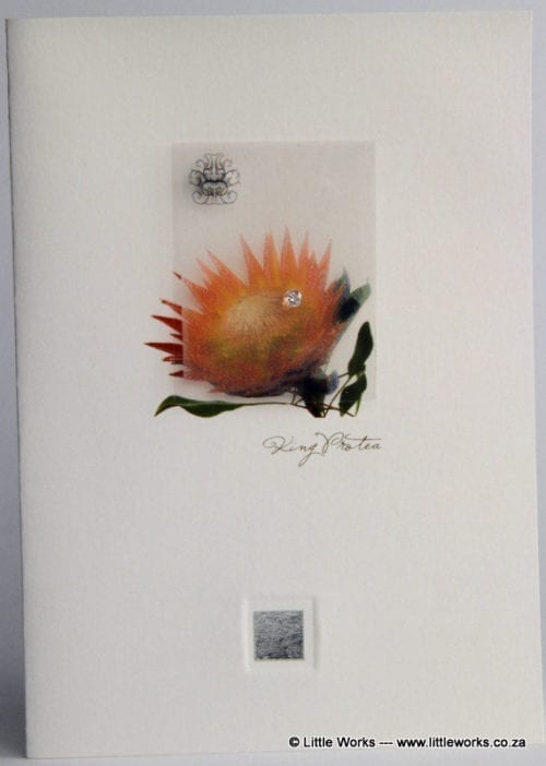 ZKP1 - Large King Protea