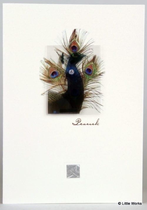ZP - Peacock