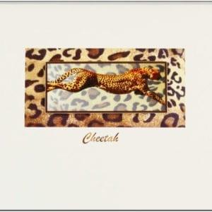 SCH - Cheetah