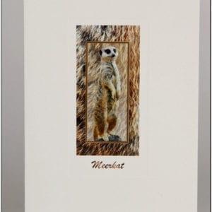 SMK - Meerkat