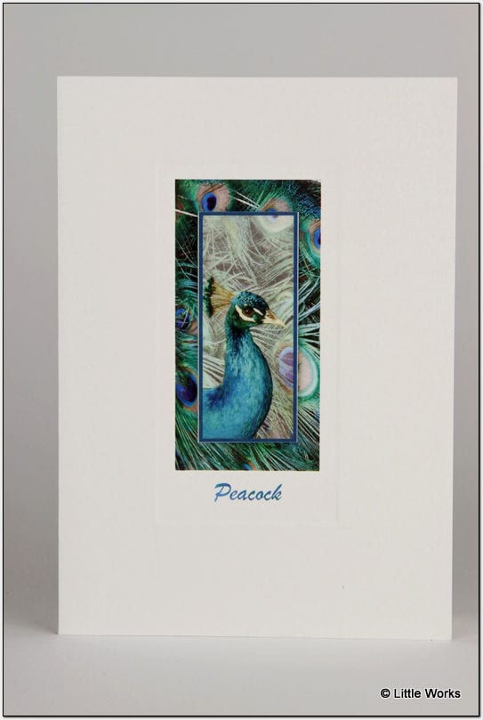 SP - Peacock