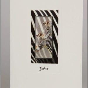SZ - Zebra