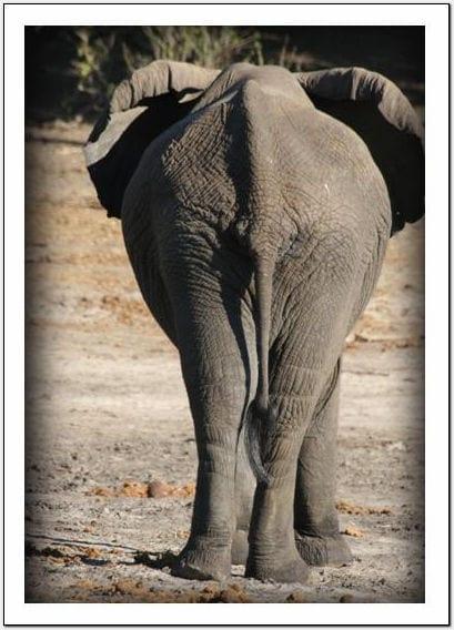 WX - Elephant
