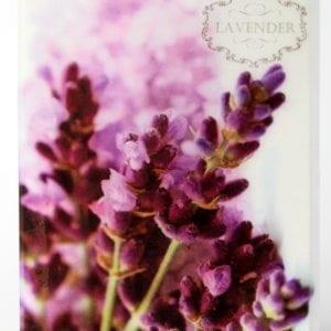 TLV - Lavender